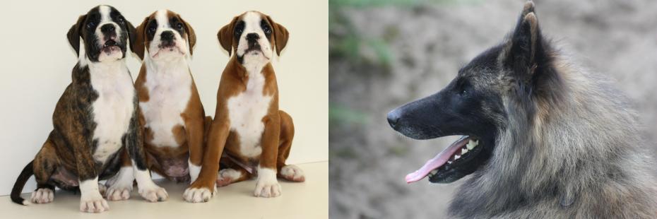 Hondenschool: diverse cursussen voor puppy's en volwassen honden.